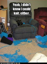 cat-knitting-not