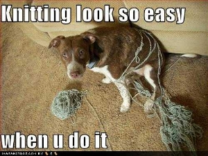 funny-dog-pictures-knitting-look-so-easy